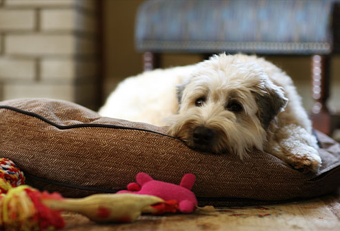dogbed.jpg