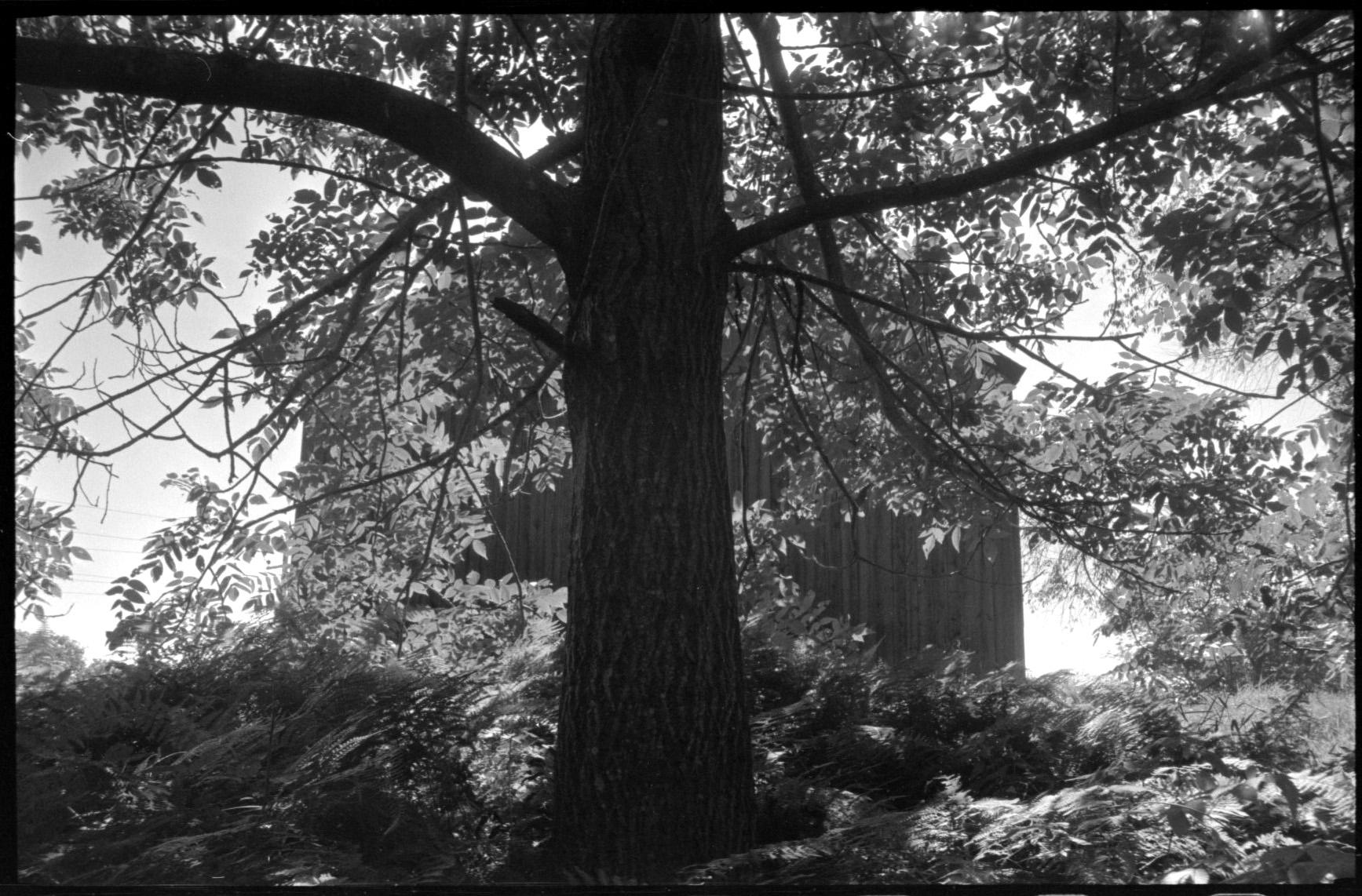 Tree @ Skowhegan.jpg