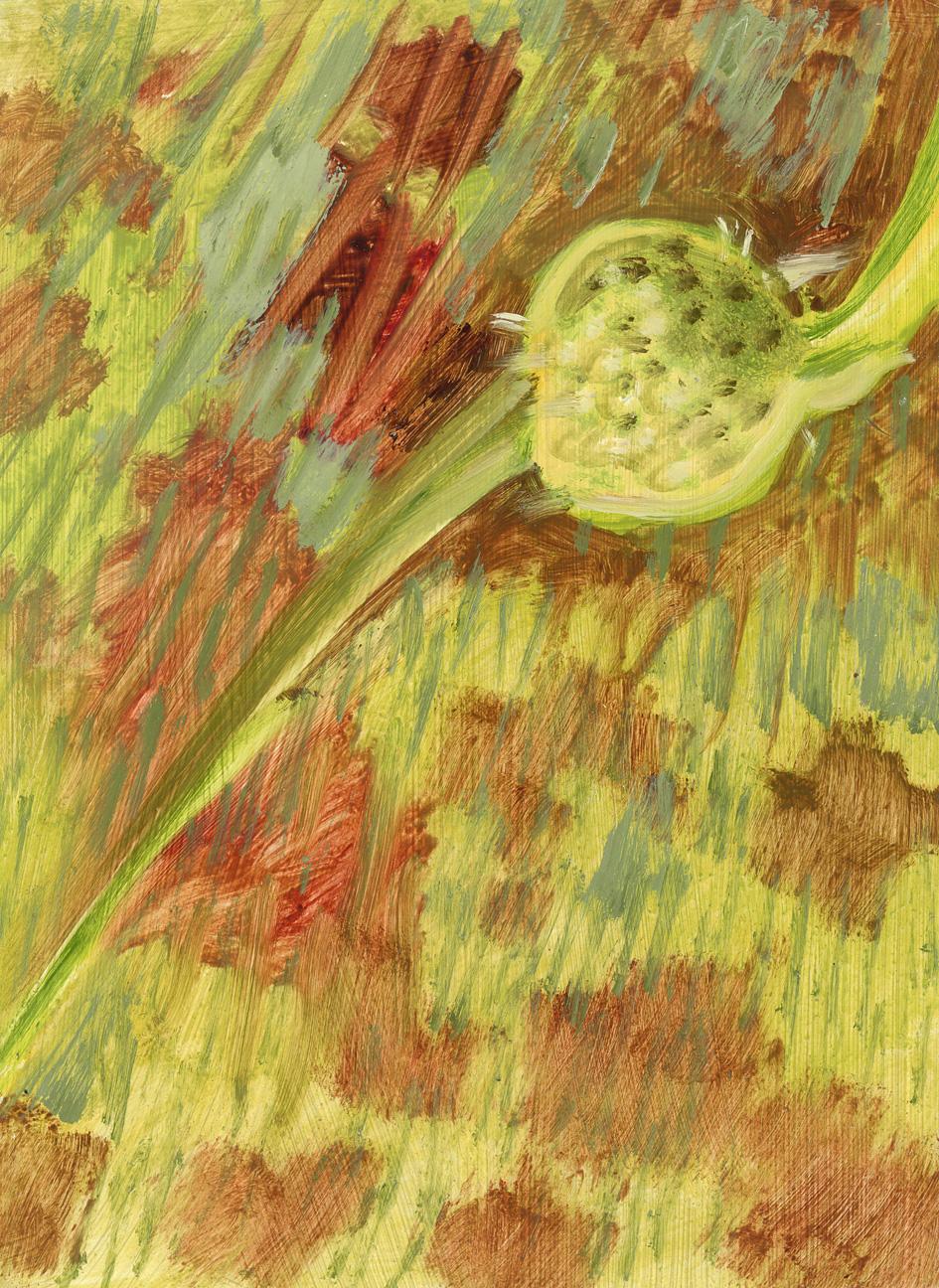 Green Seedhead