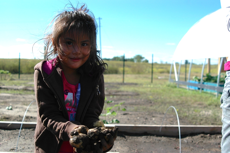Harvesting potatoes in the community garden
