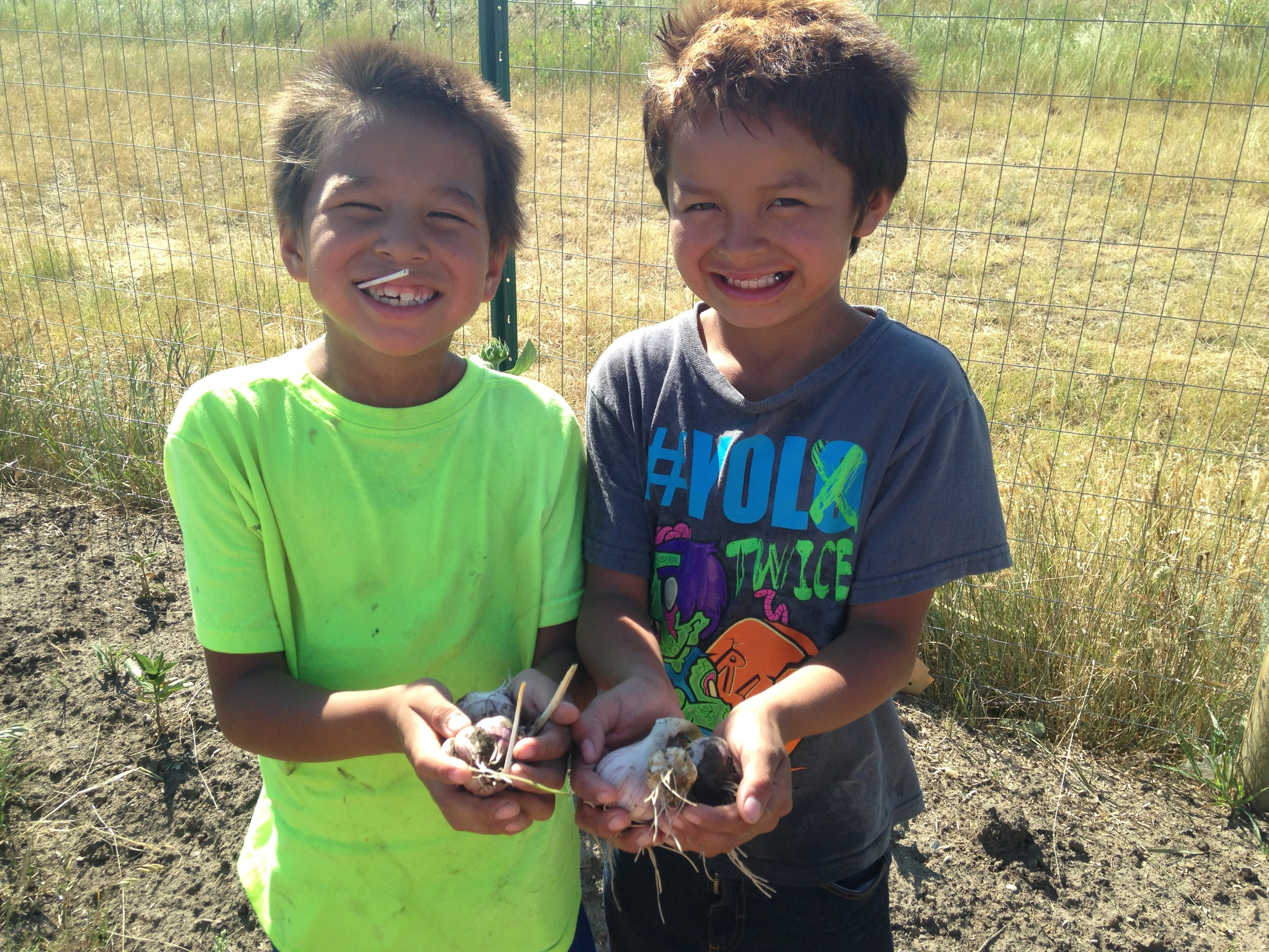 Helping hands in the garden! These young farmers helped to harvest garlic in the garden! (A.Gross, July 2015, La Plant)