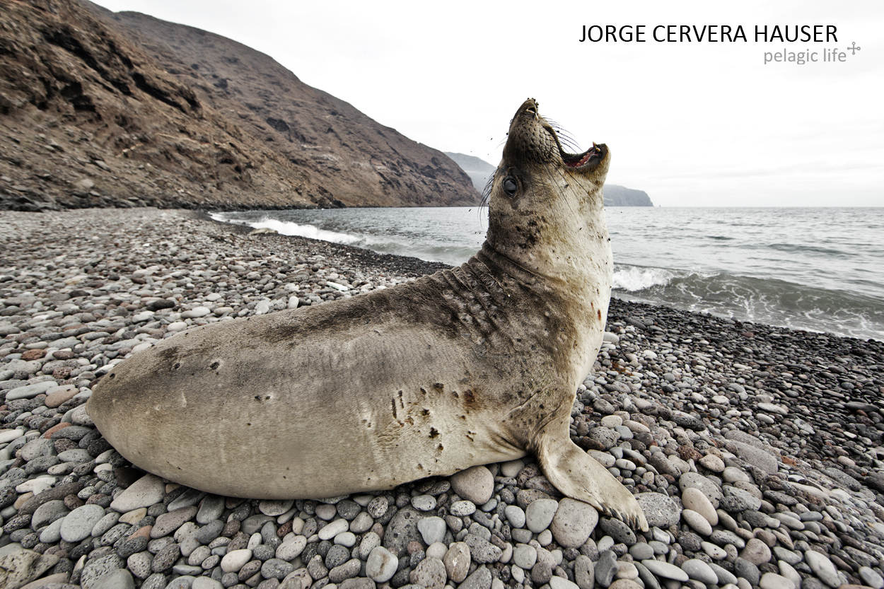 428 - Jorge Cervera - Guadalupe SW - Mexico - September 2012.jpg