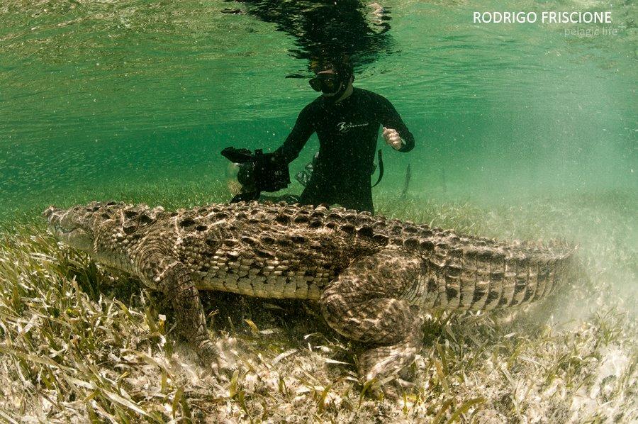 705 Caribean Dragons-Rodrigo Friscione-Chinchorrro-Julio 2013.jpg