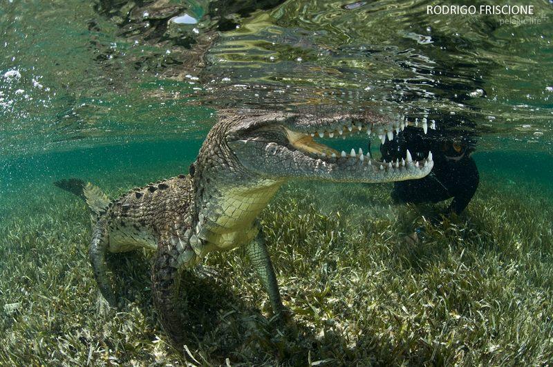 706 Caribean Dragons-Rodrigo Friscione-Chinchorrro-Julio 2013.jpg