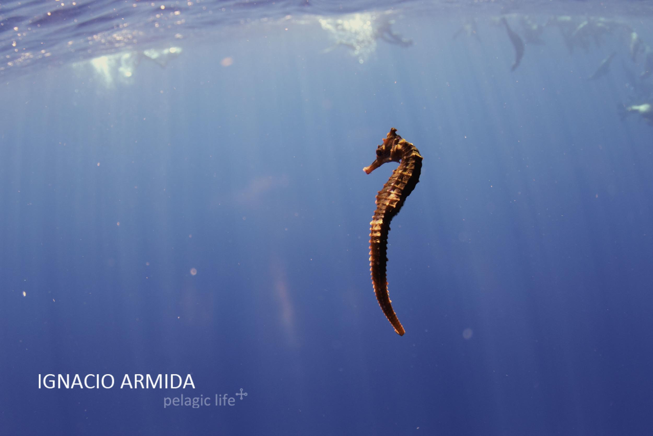 Ignacio Armida ©