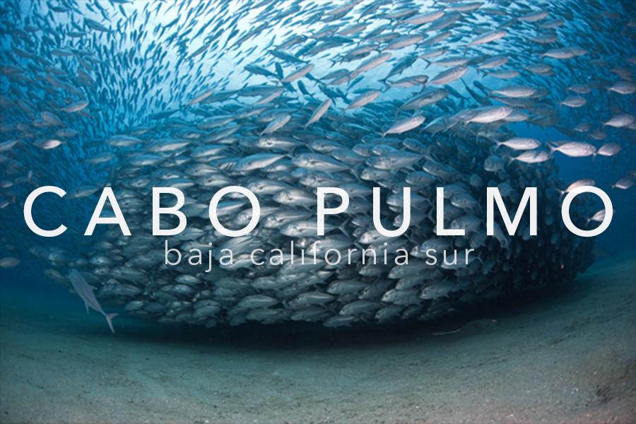 PELAGIC LIFE CABO PULMO.png