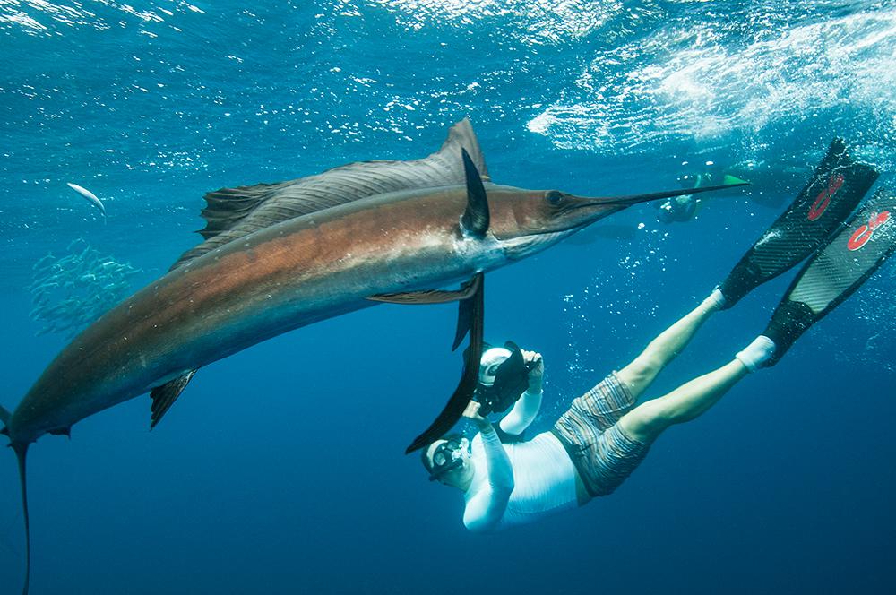 DSC_4466 pez vela lalo RFW.jpg