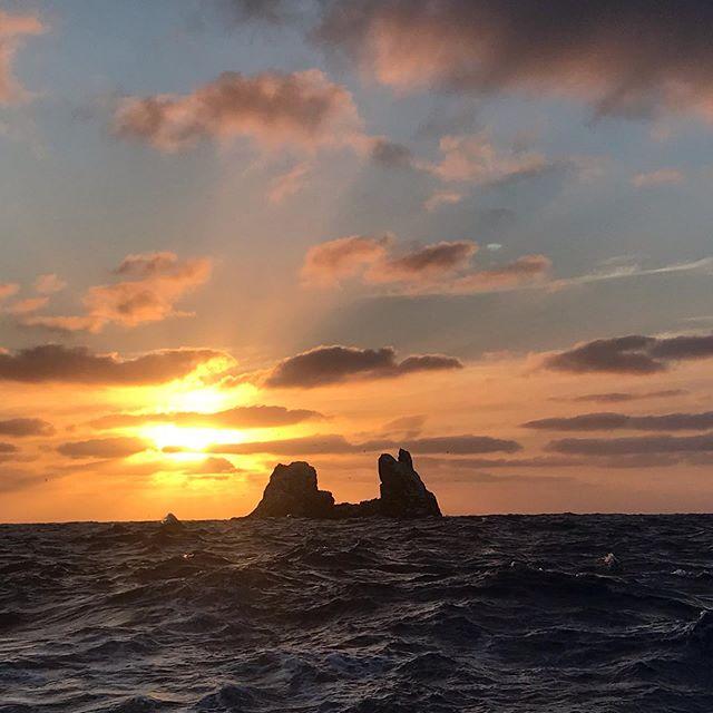 We miss this  rock! 🦈🐬🐳🐟🐠🦈🦈🐳🐳🐳🐡🐙🐋🐋🦞🦈🦈🦀🦞🦀🦈🦈🦈🦈#therock #revi #rocapartida #mexicopelagico2 #pelagiclife