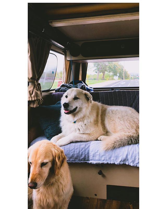 This little family is excited to be on the road again! #campinglife #vanlife #campervan