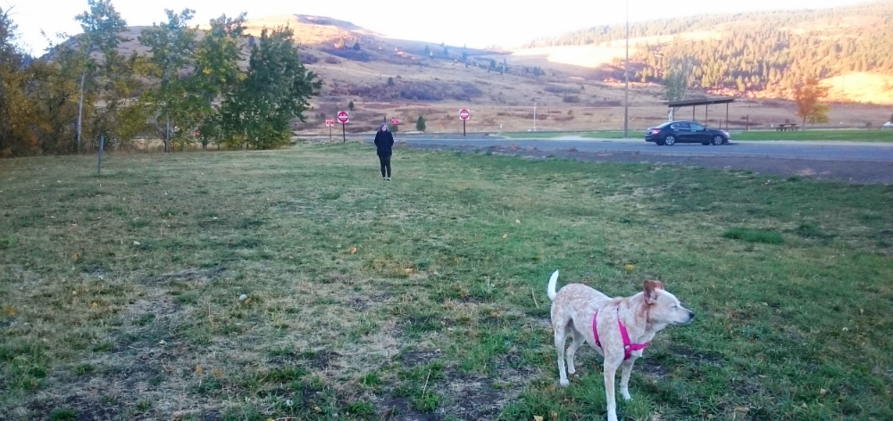 Our Rest Stop just outside of Boise, ID to take Ollie for a walk and play