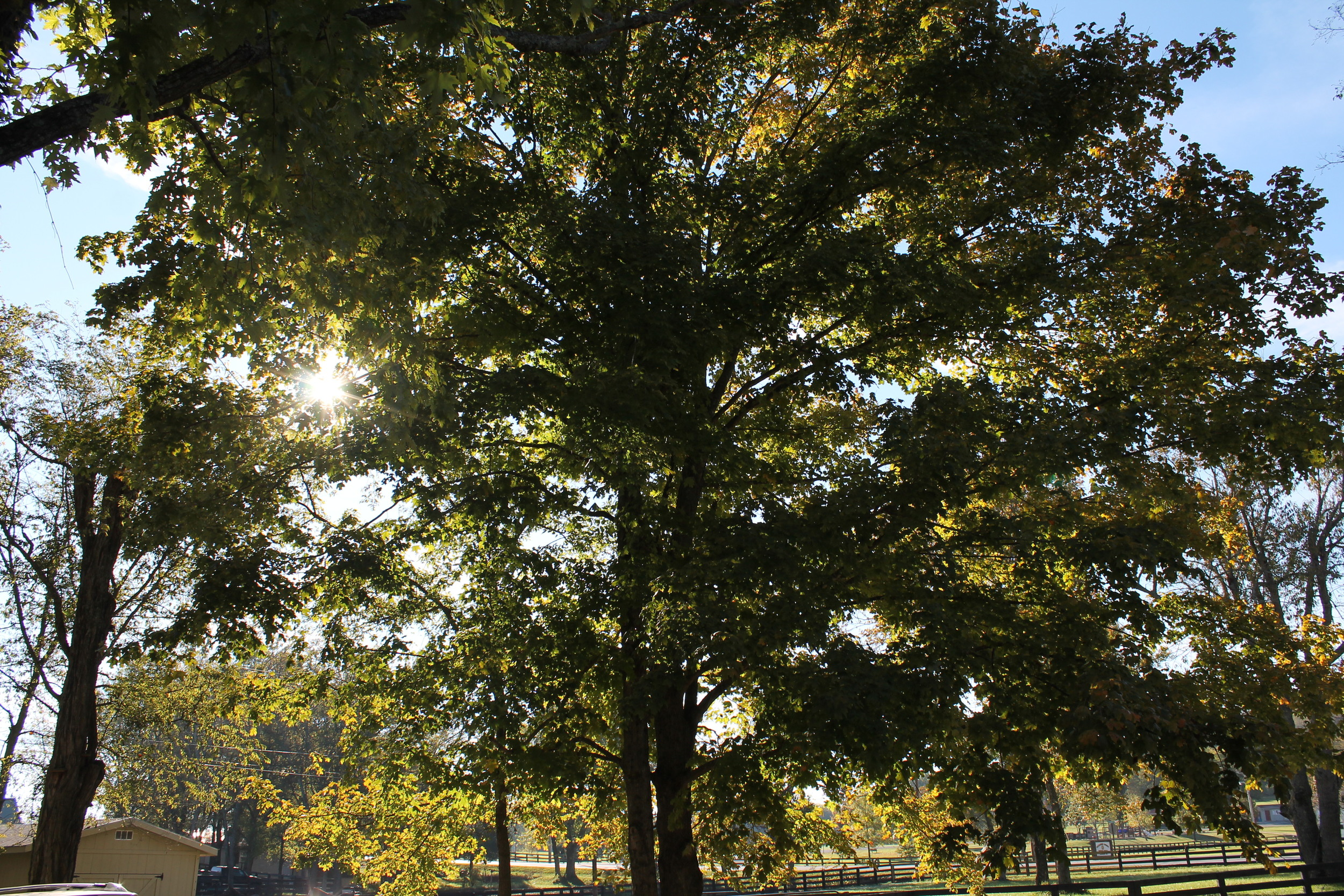The Town of Thompson's Station is truly a beautiful place in the fall. The Allenwood Development Team hopes to preserve as many of the property's trees as possible, adding to both the privacy of the residents and natural beauty of the landscape.