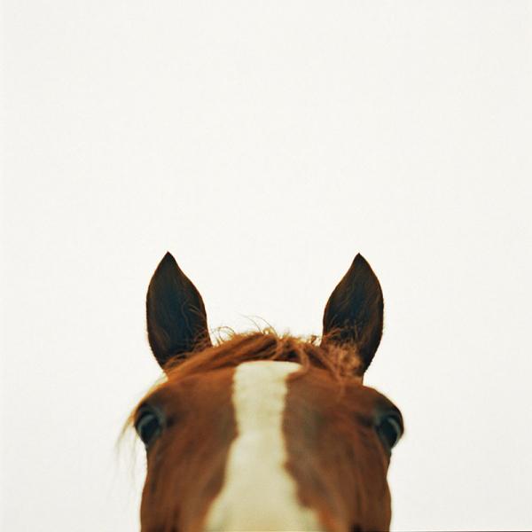 1_animal8.jpg