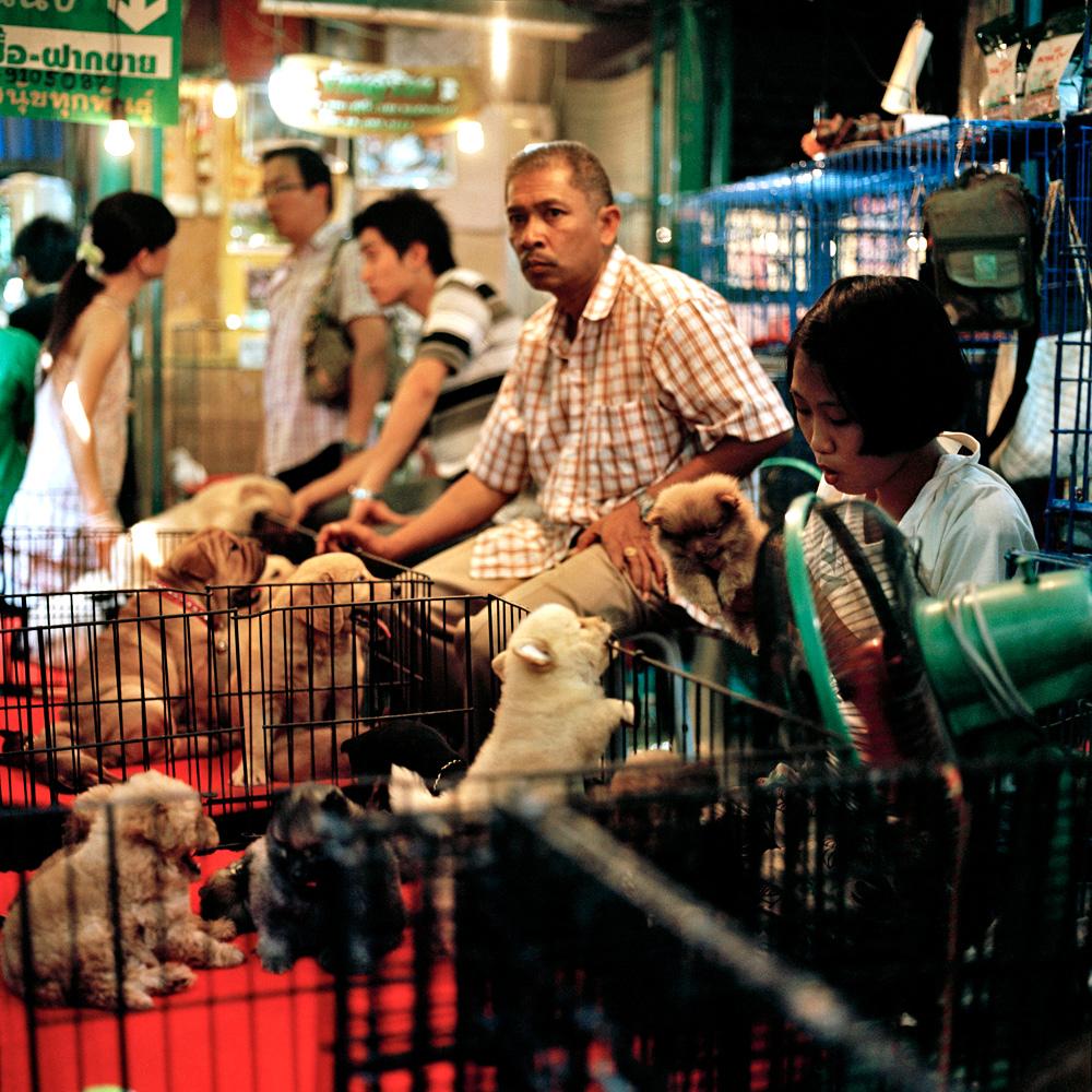 puppymarket.jpg