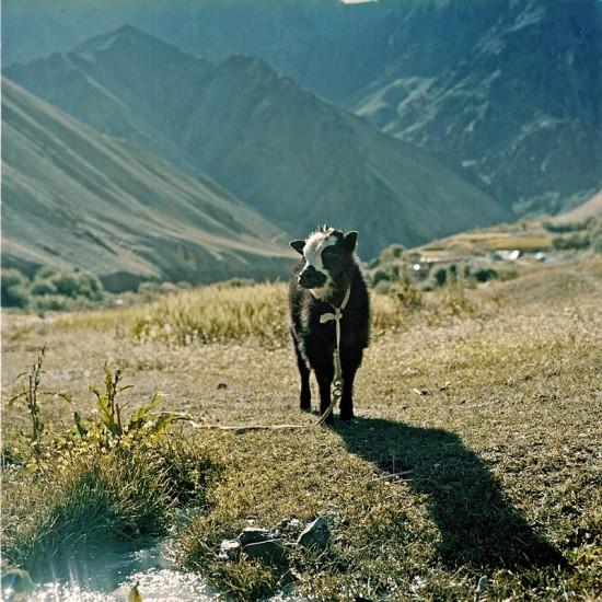 ladakh8-550x550.jpg