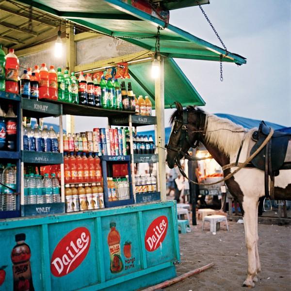 6_thirsty.horse_-e1412799676236.jpg