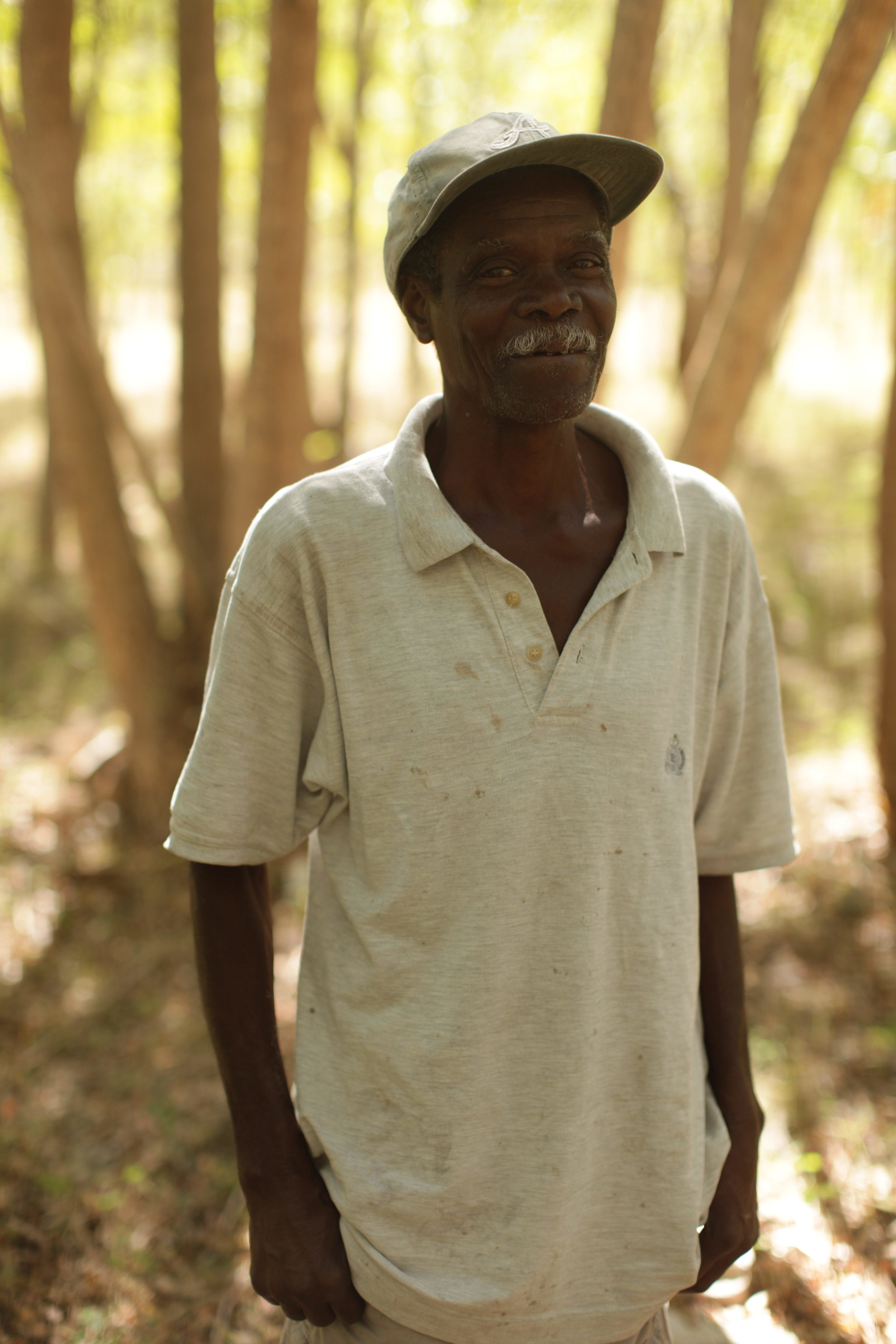 MCC subsidized 140 micro forests for tree farmers like Ulrick Elismar who grow a variety of quick growing trees on half a hectare of land. The farmers agree to not harvest for 5 years, after which the forest will mature to allow sustainable harvesting. Each farmer is expected to make about 20,000 Gourde (about $500 USD) per year.