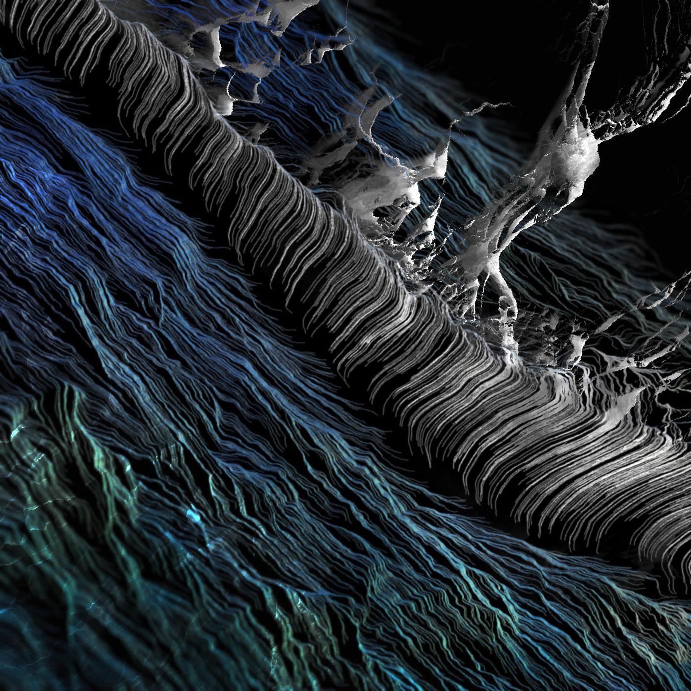 phytoplankton.png