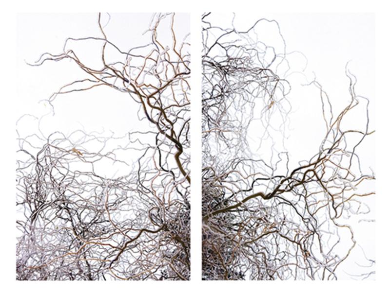 Wavering Winter Willow