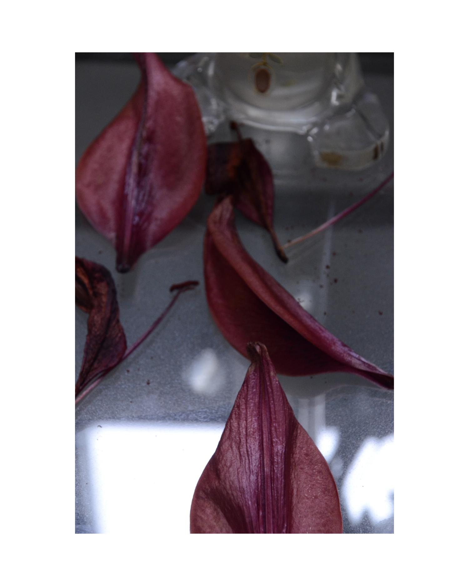 Petals 1