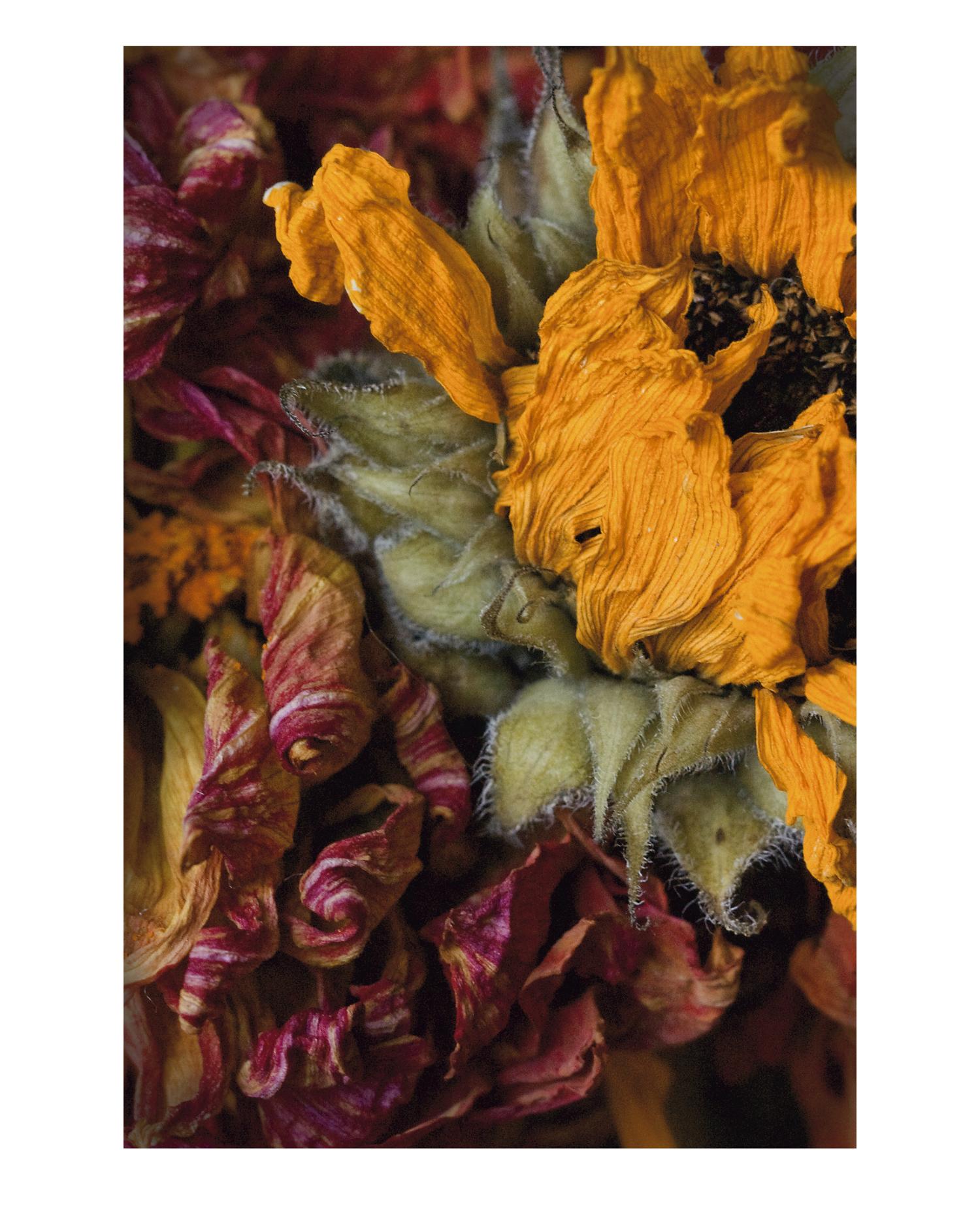Flower Dahlia 1
