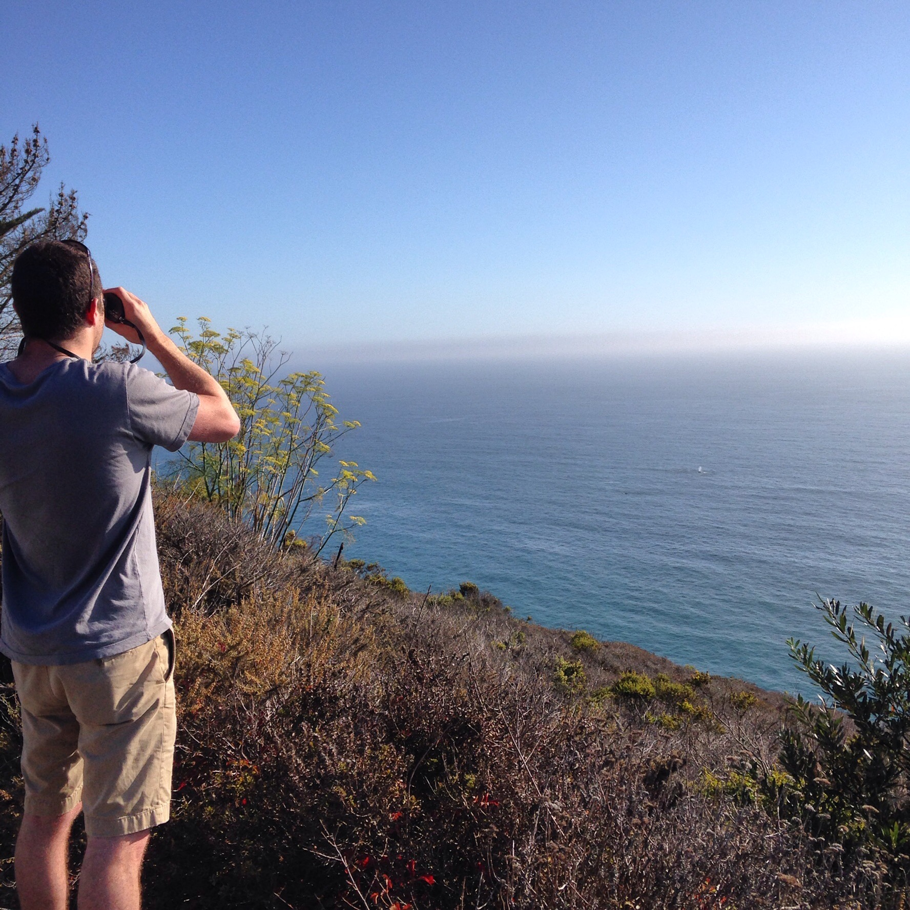 We spotted whales on a trip down the coast!  Read all about  our trip to a sleepy beach town.