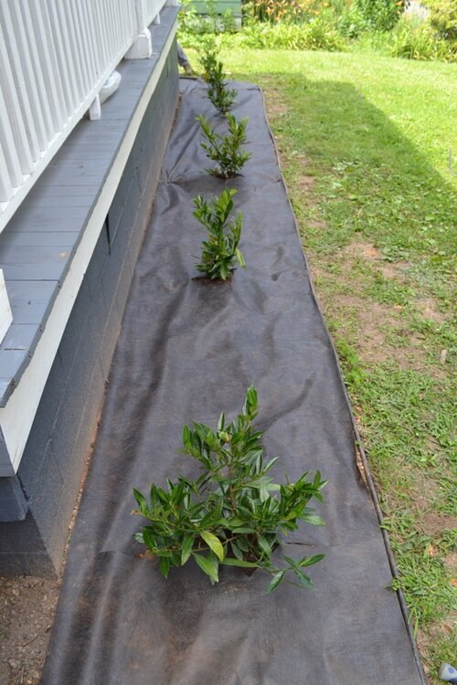 The landscape cloth was secured with metal stakes at various points to keep it in place.
