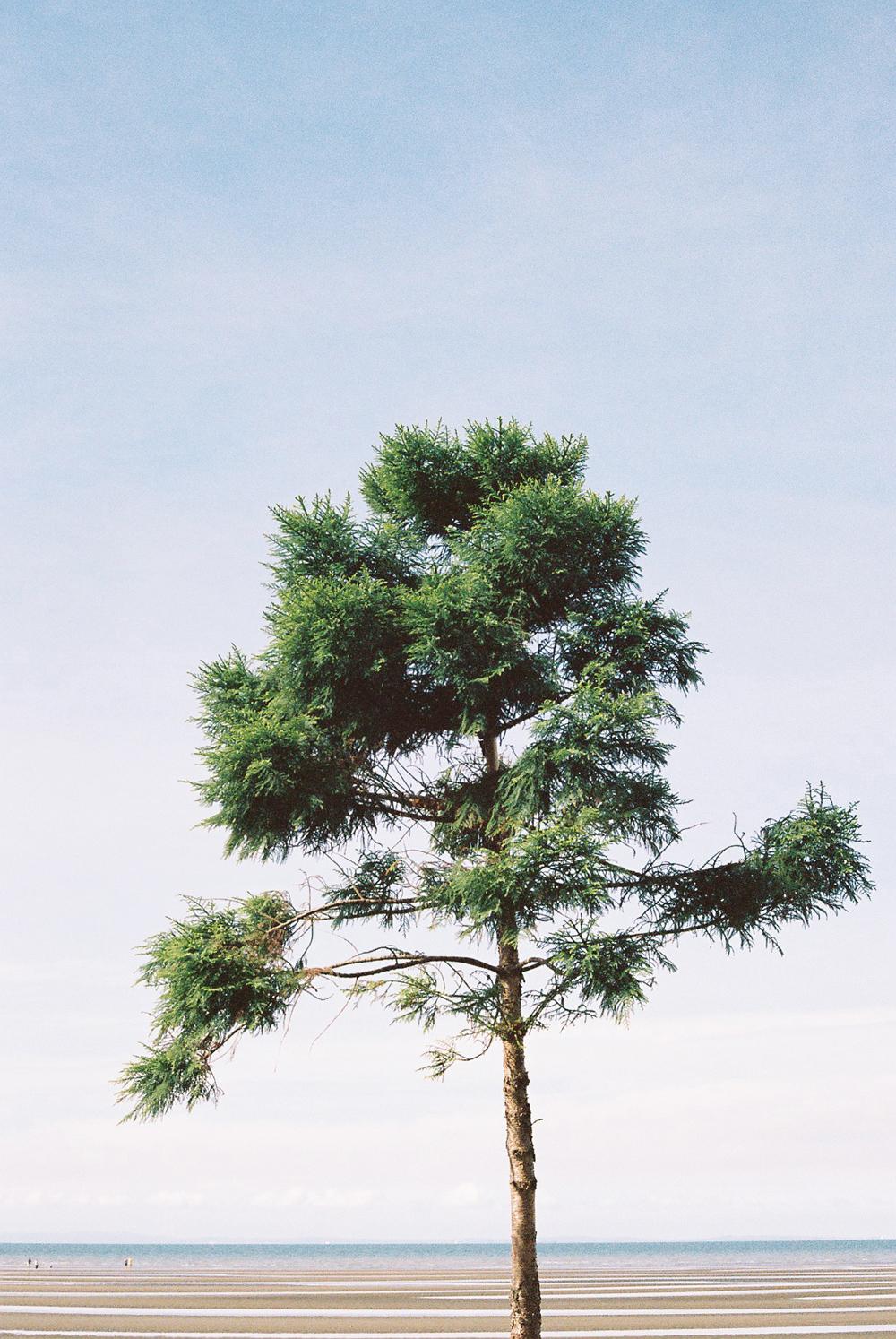 sandgate+brisbane+tree+35mm+film+fuji+400H+falling+for+florin.jpg