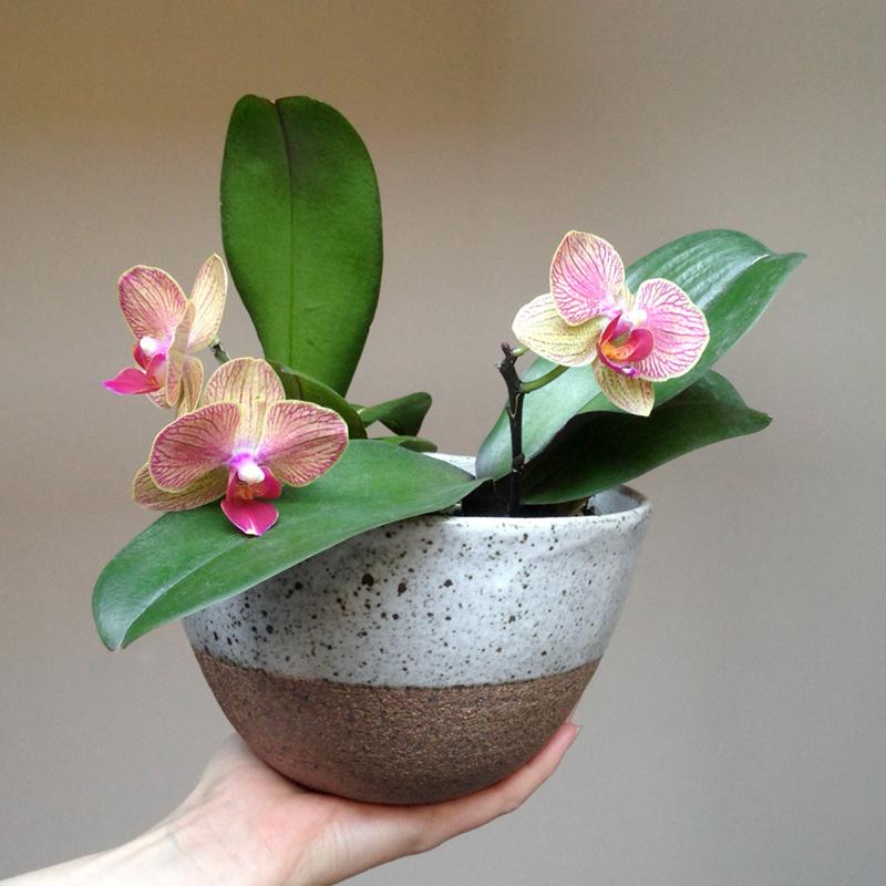 lisa peri handmade ceramic planter falling for florin