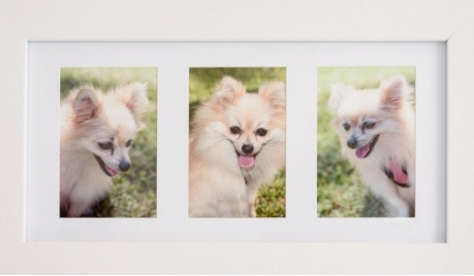 northern beaches pet photography