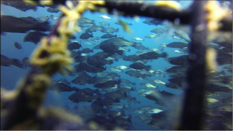 aquapodsfish.jpg
