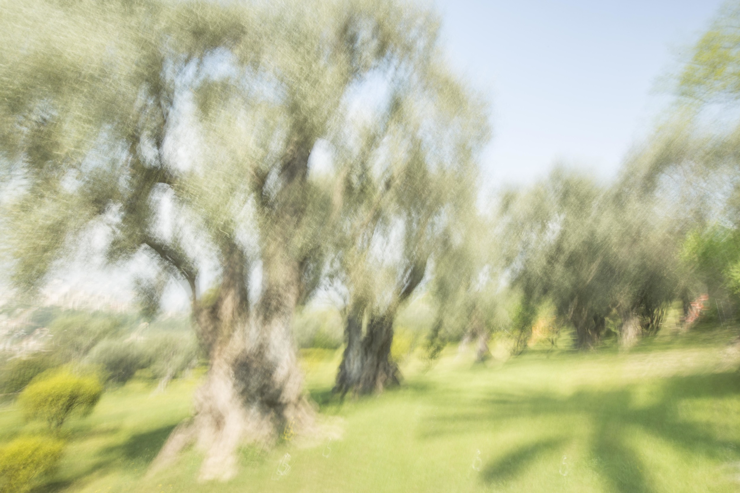 Anatoly Rudakov, Renoir's Garden #1, 2013