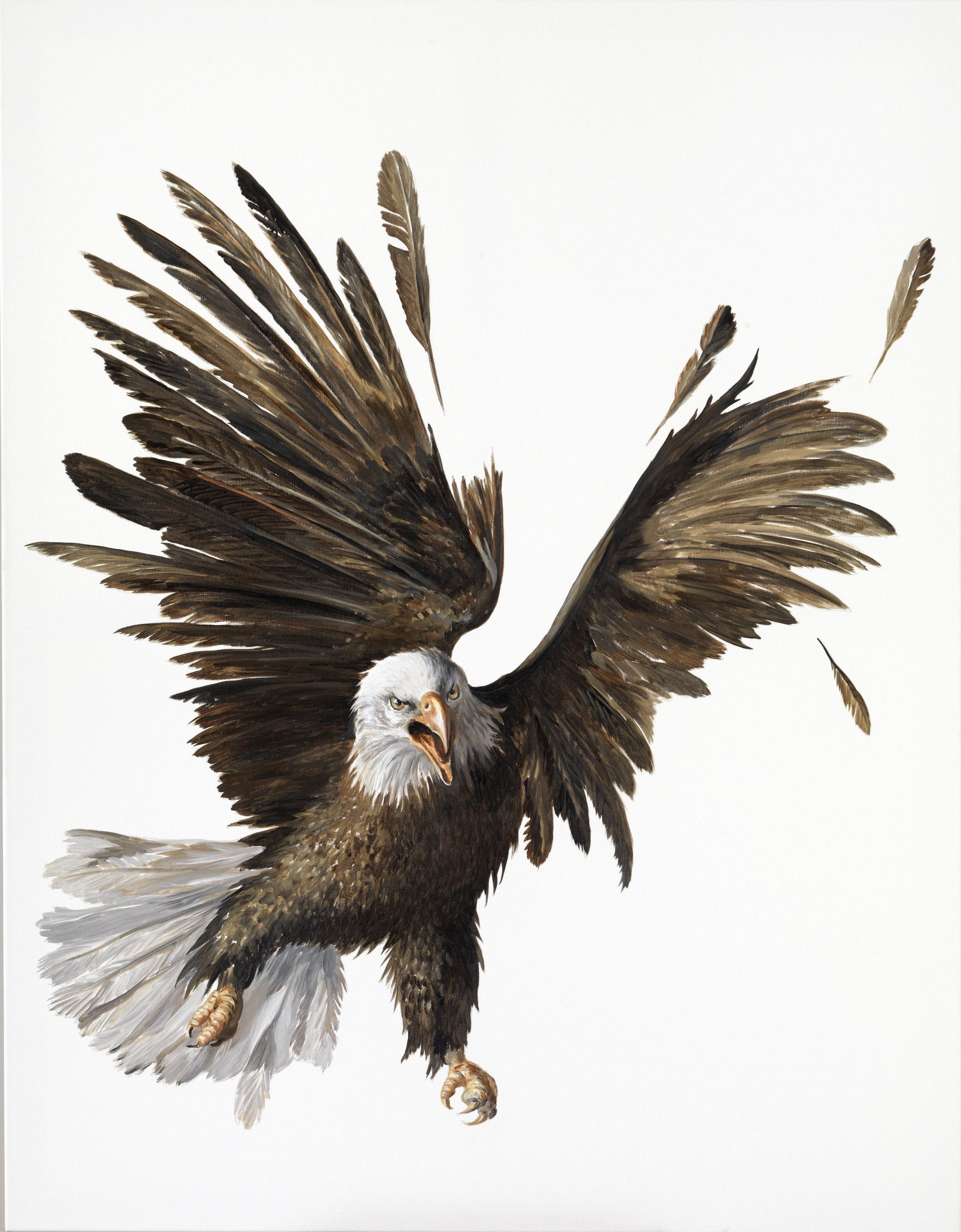 Genia Chef, Eagle, 2011