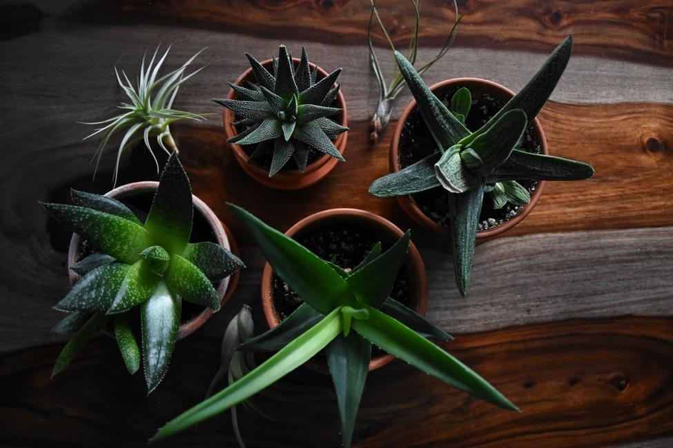 Tiny Houseplants For House Living