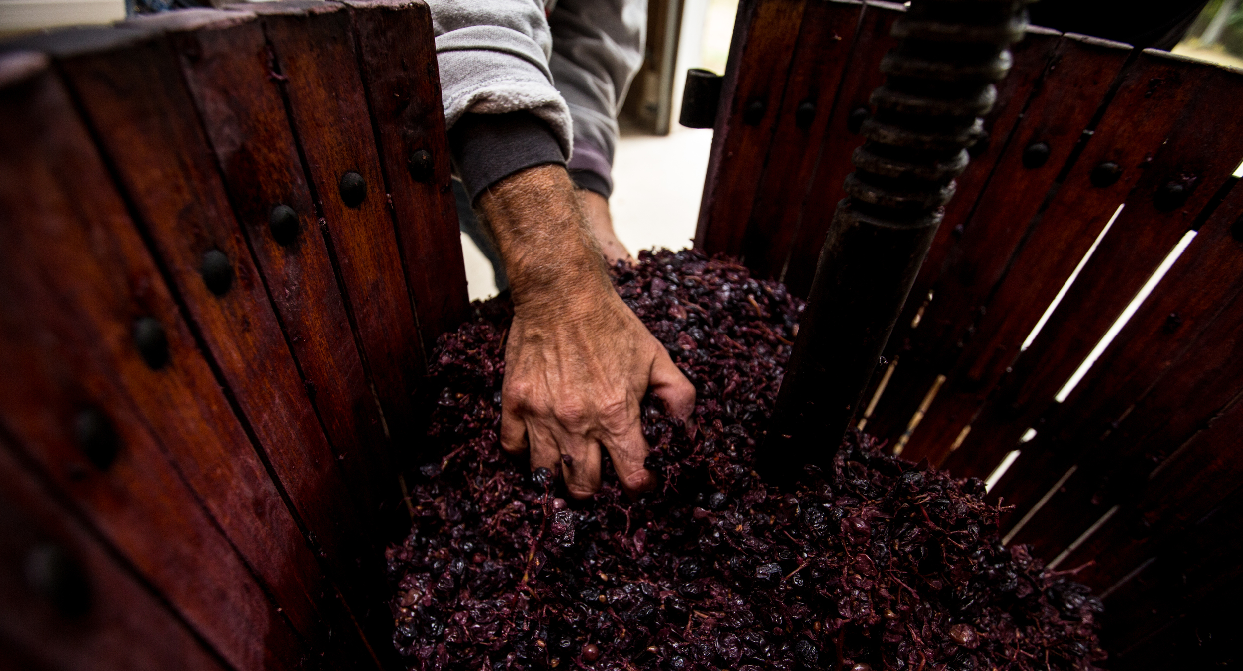 WINEMAKING_100515-7.jpg