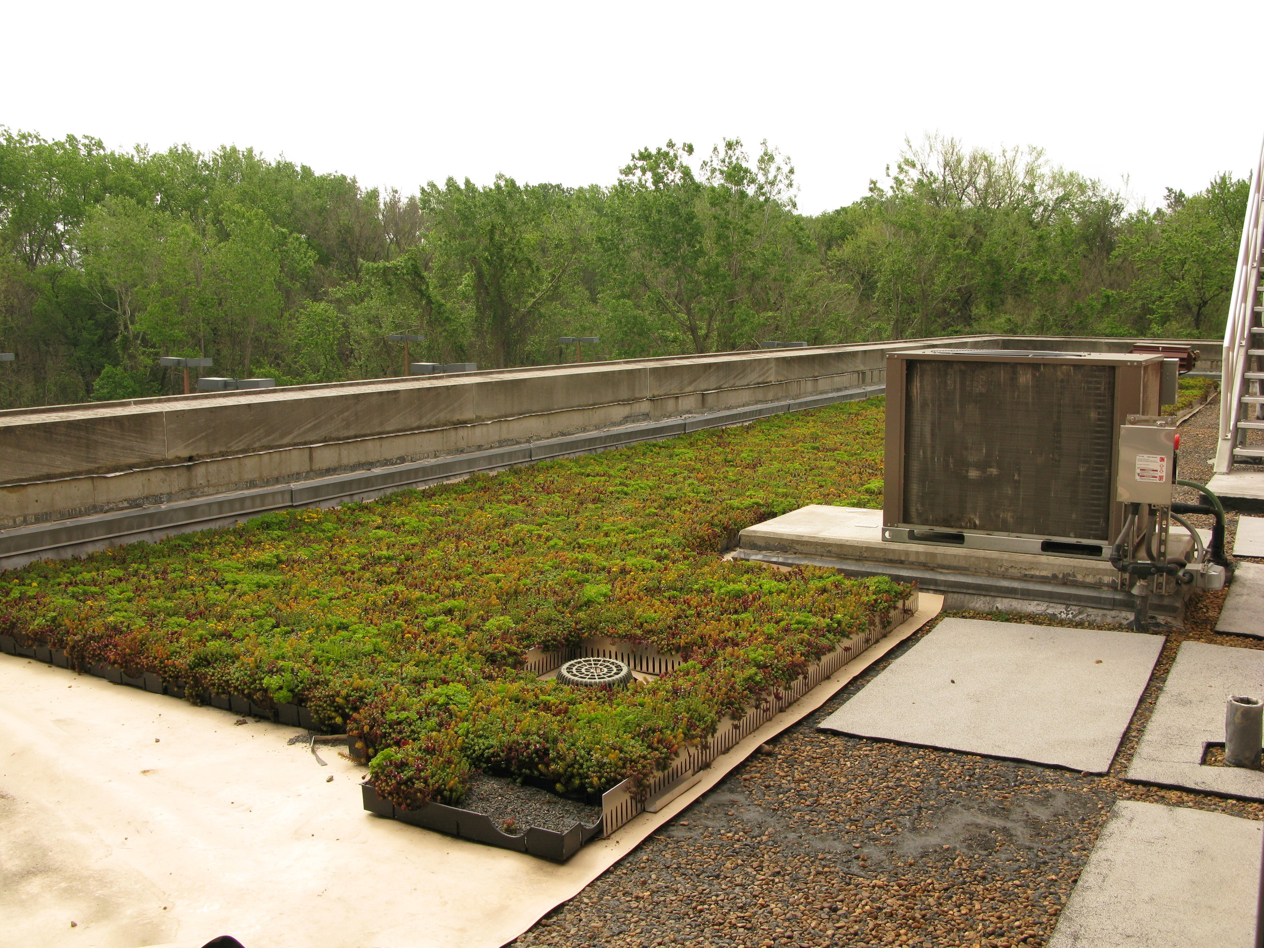 green roof 2.jpg