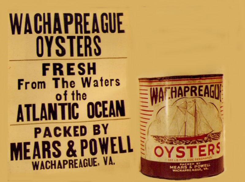 Wachapreague Oyster