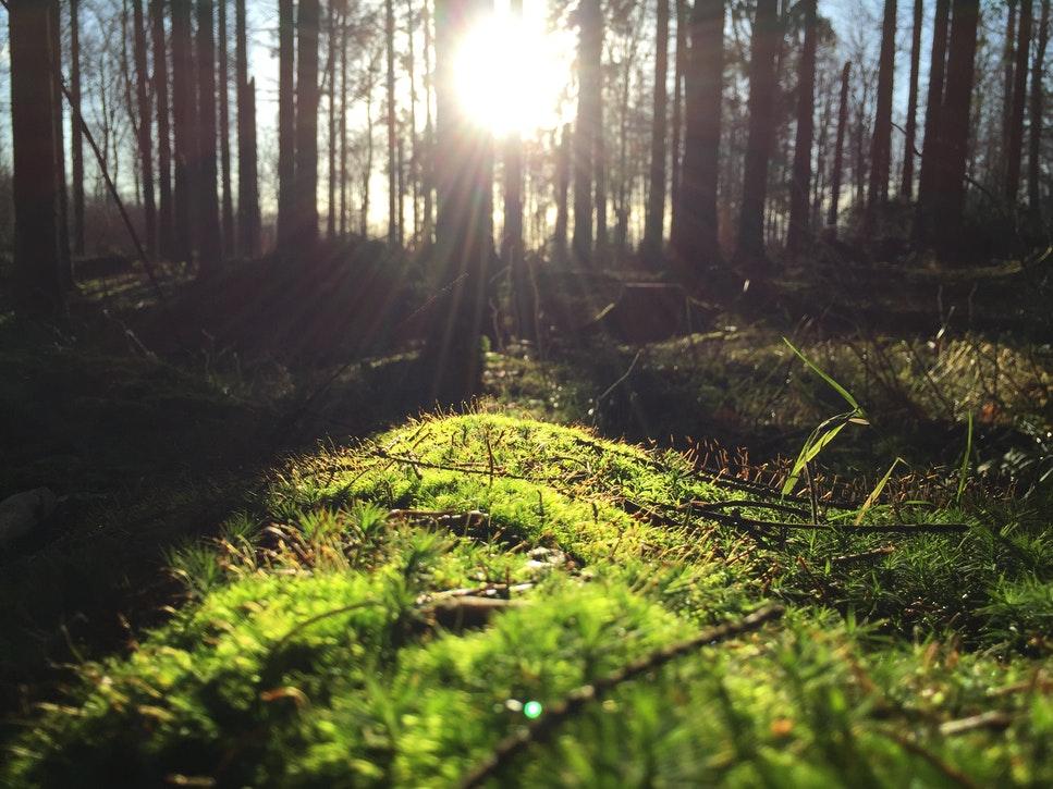 sun through trees.jpg