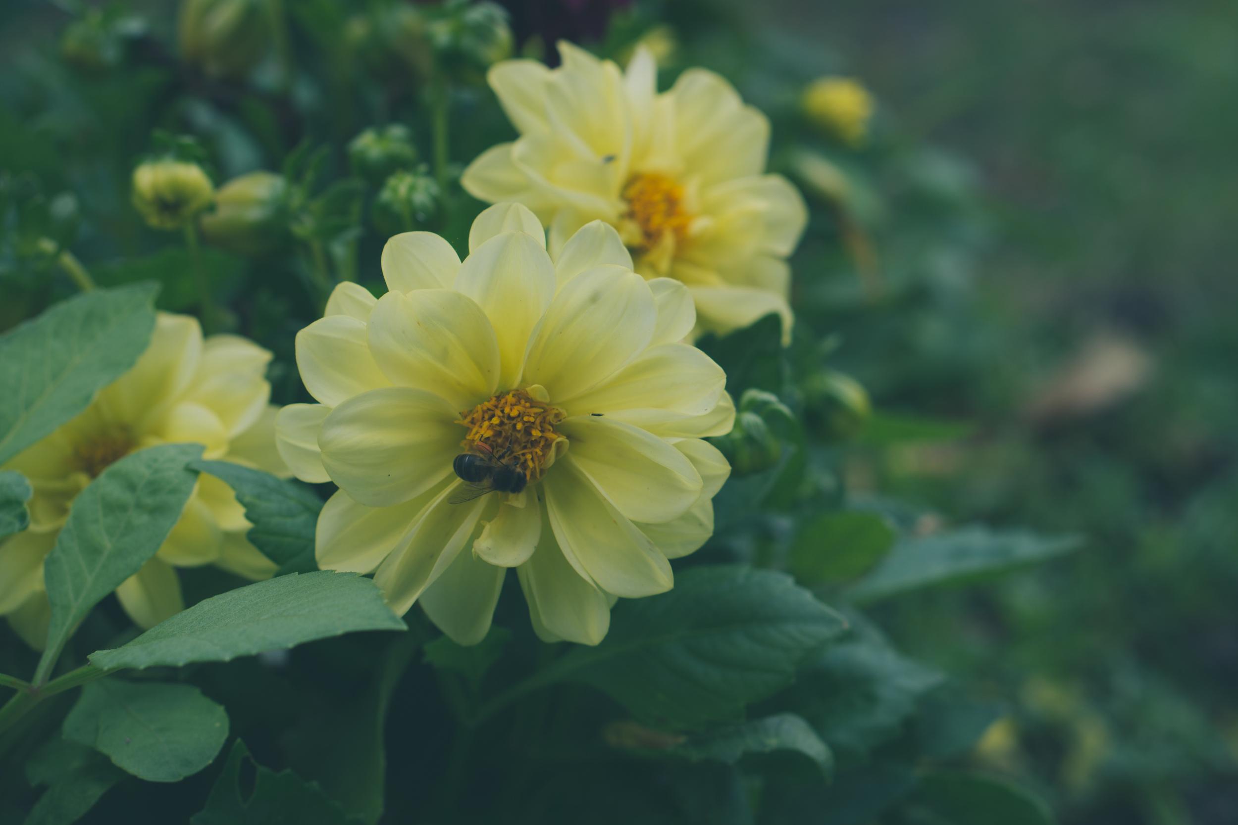 garden-20.jpg
