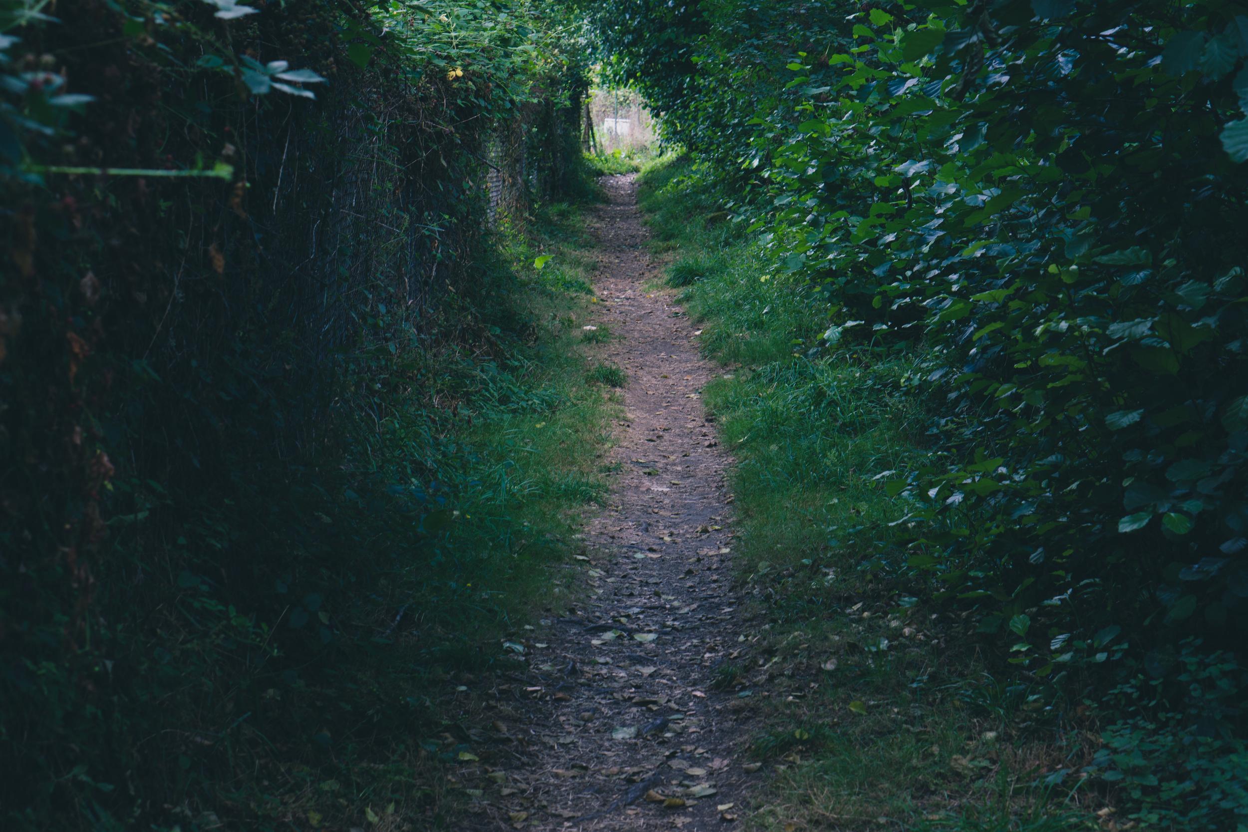 garden-28.jpg