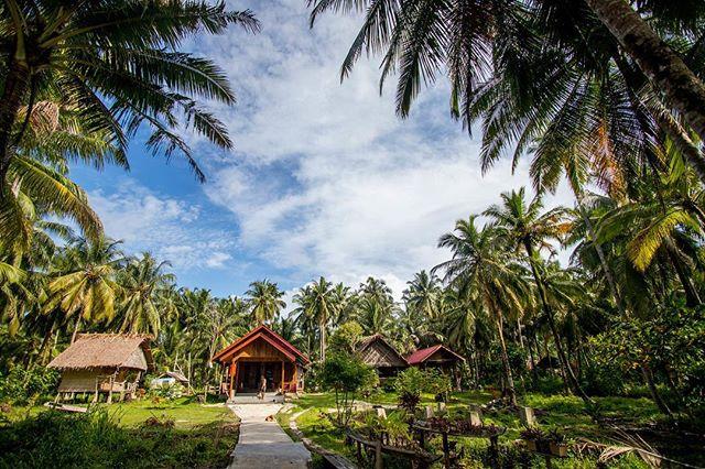 Indo-cytosis... our land camp in the Mentawai islands engulfed in palm trees.  @rileyill @gap_doi #indonesia #ebay #surfcamp #mentawai #canonusa #travel #biologypuns