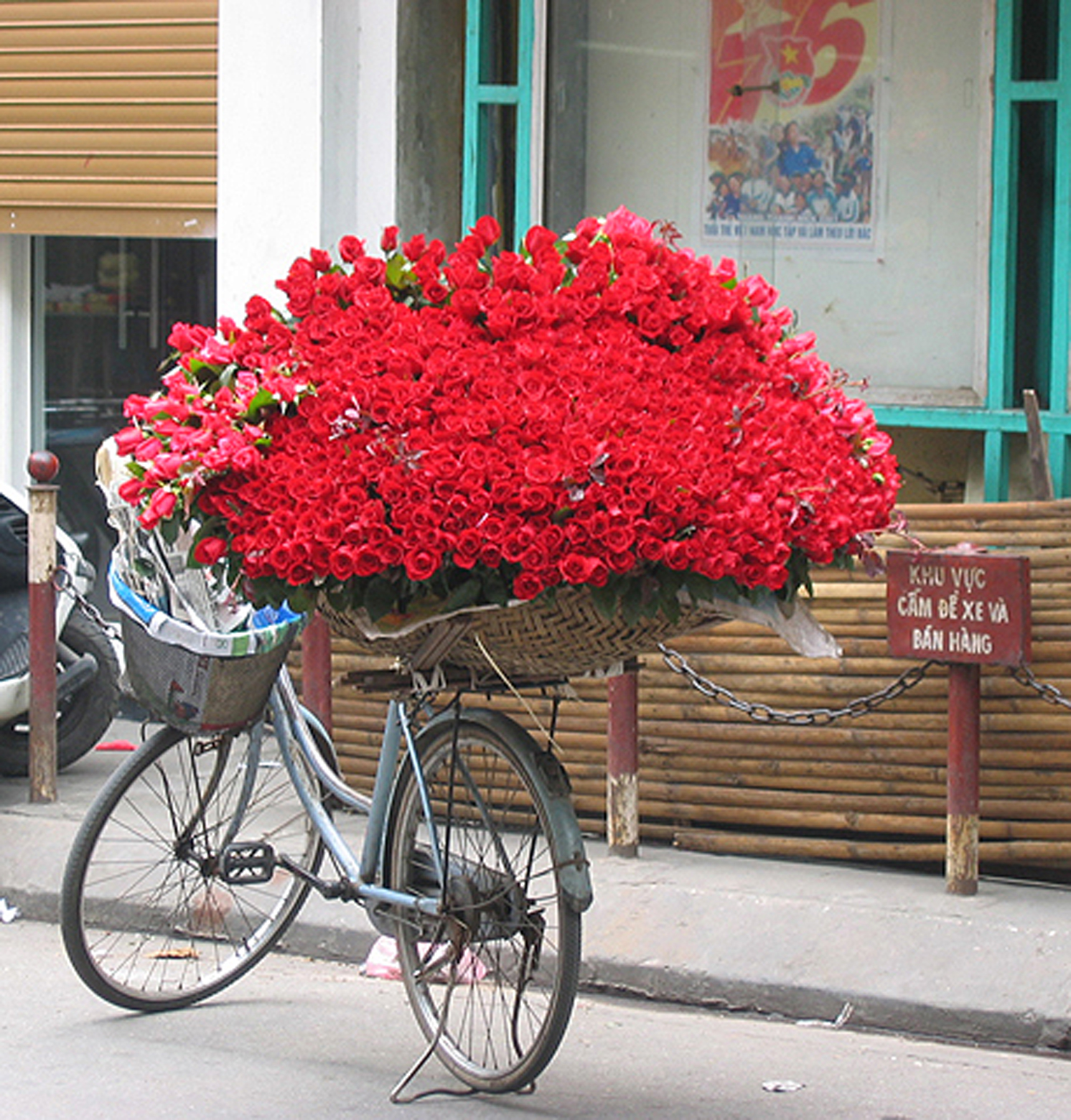Hanoi Rose bike.jpg