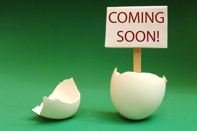 coming-soon pollito.jpg