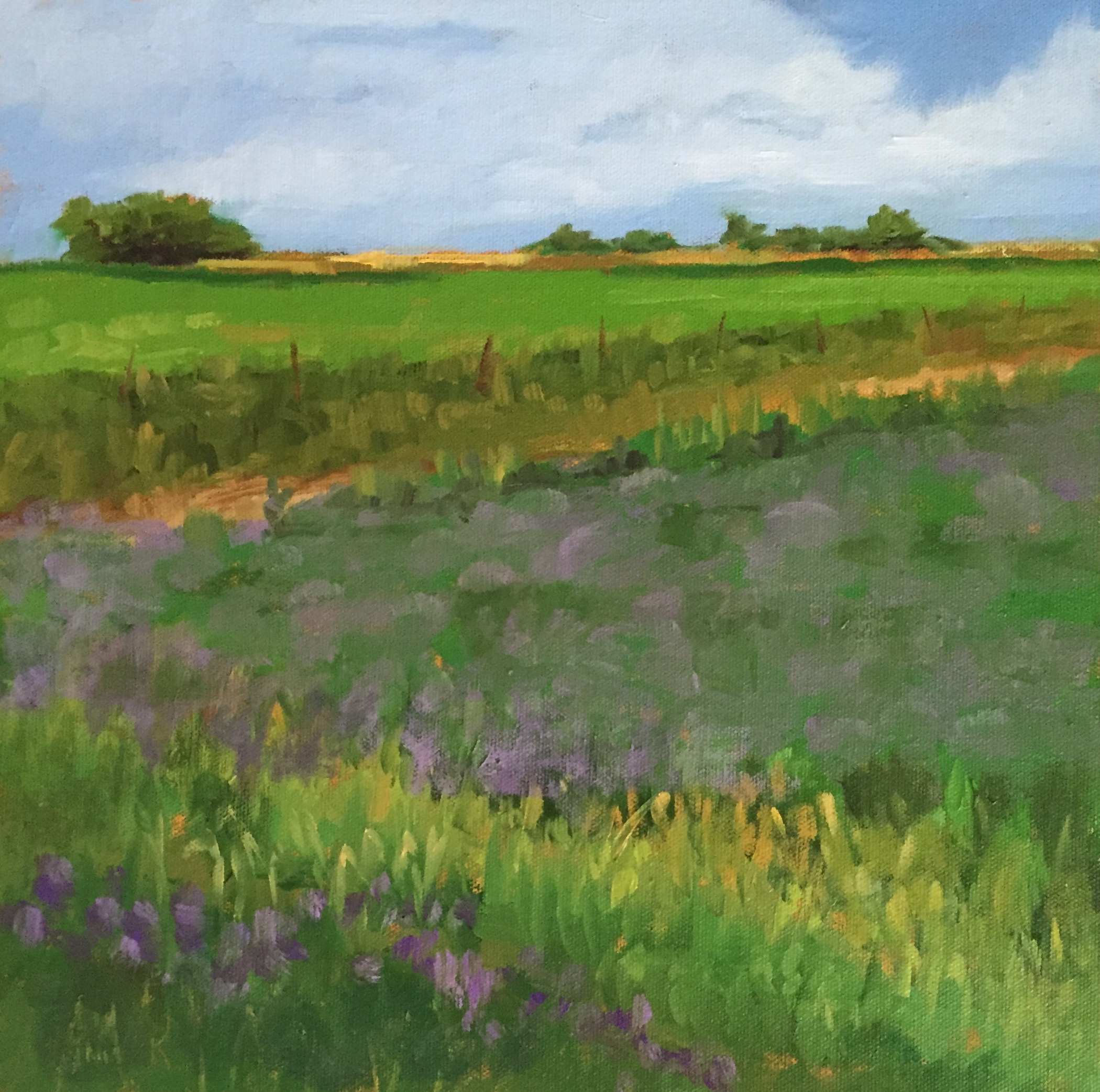 """Field Of Clover  12"""" x 12""""  Juried into Women Artists Of The West 2018 National Exhibition"""