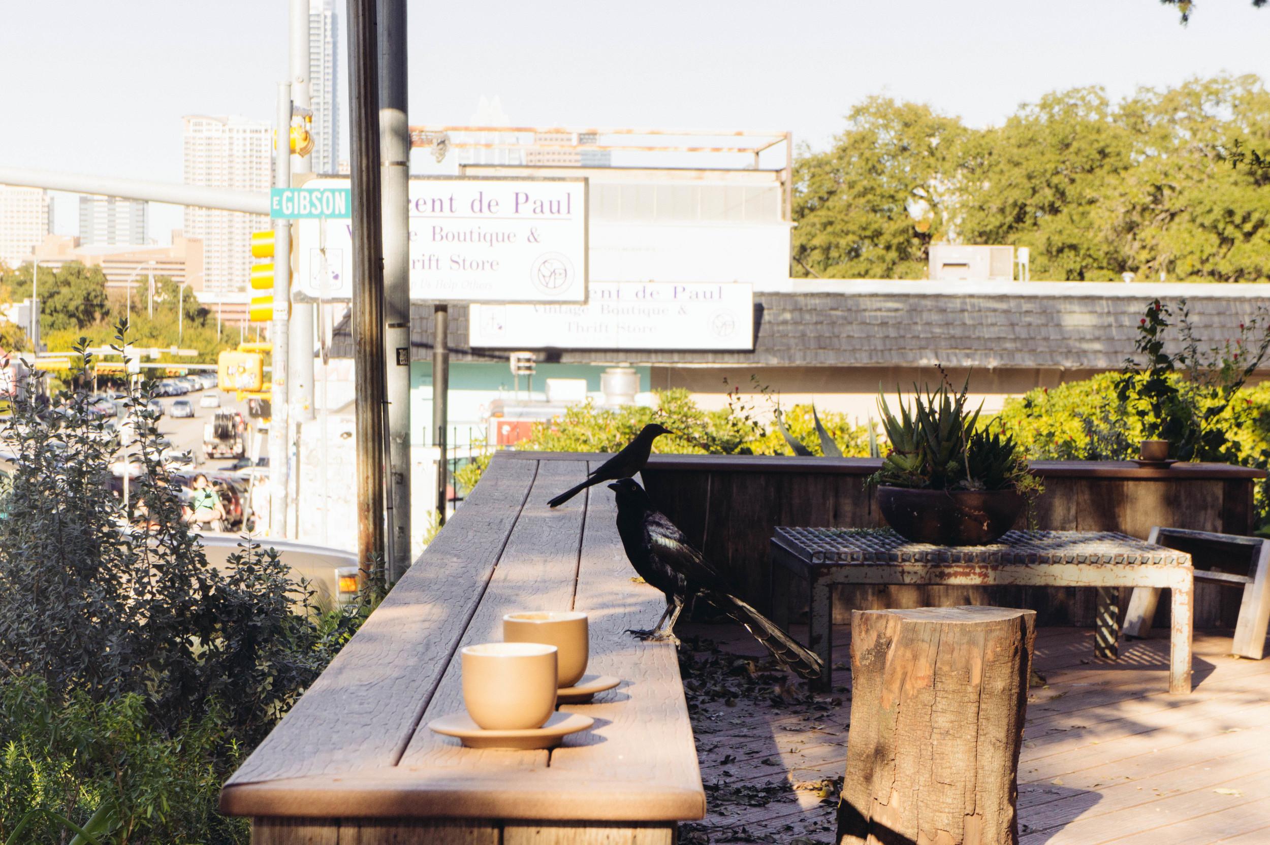 LeSycomore_Travel-Toms-Austin