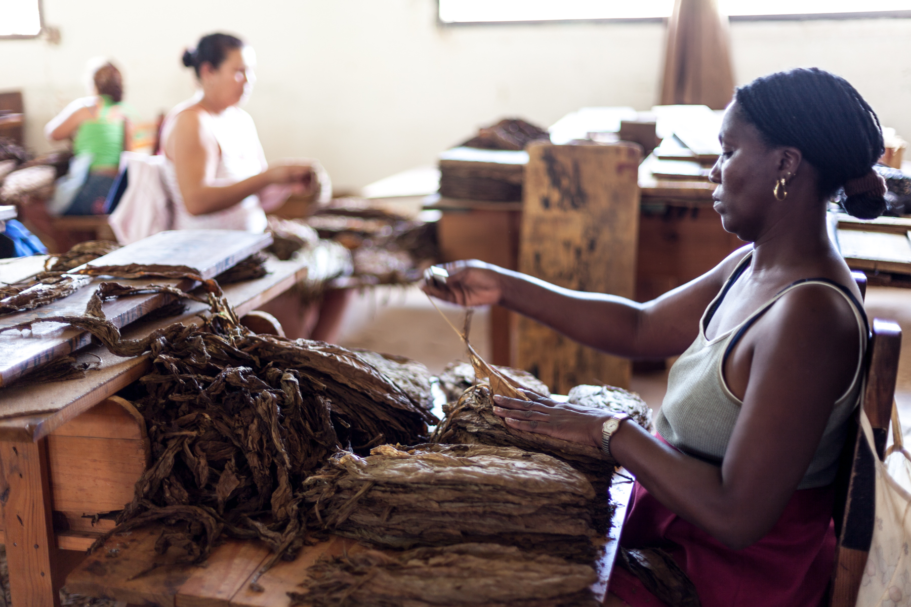 Le Sycomore_Vinales-Cuba