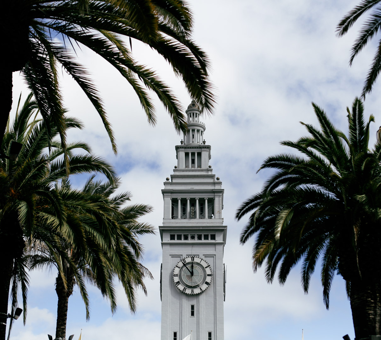 Tip of Ferry Building surronded by palm trees