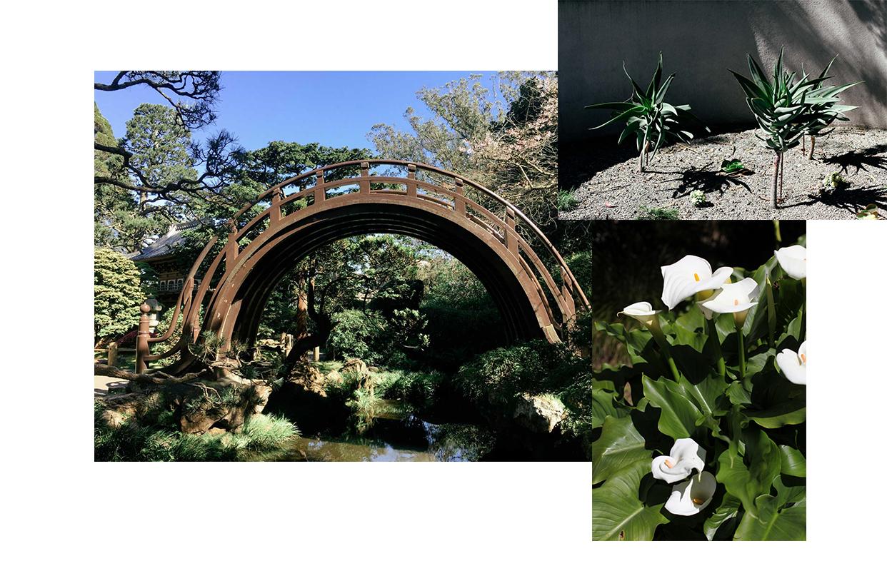 Japanese Tea House and SF Botanic Garden