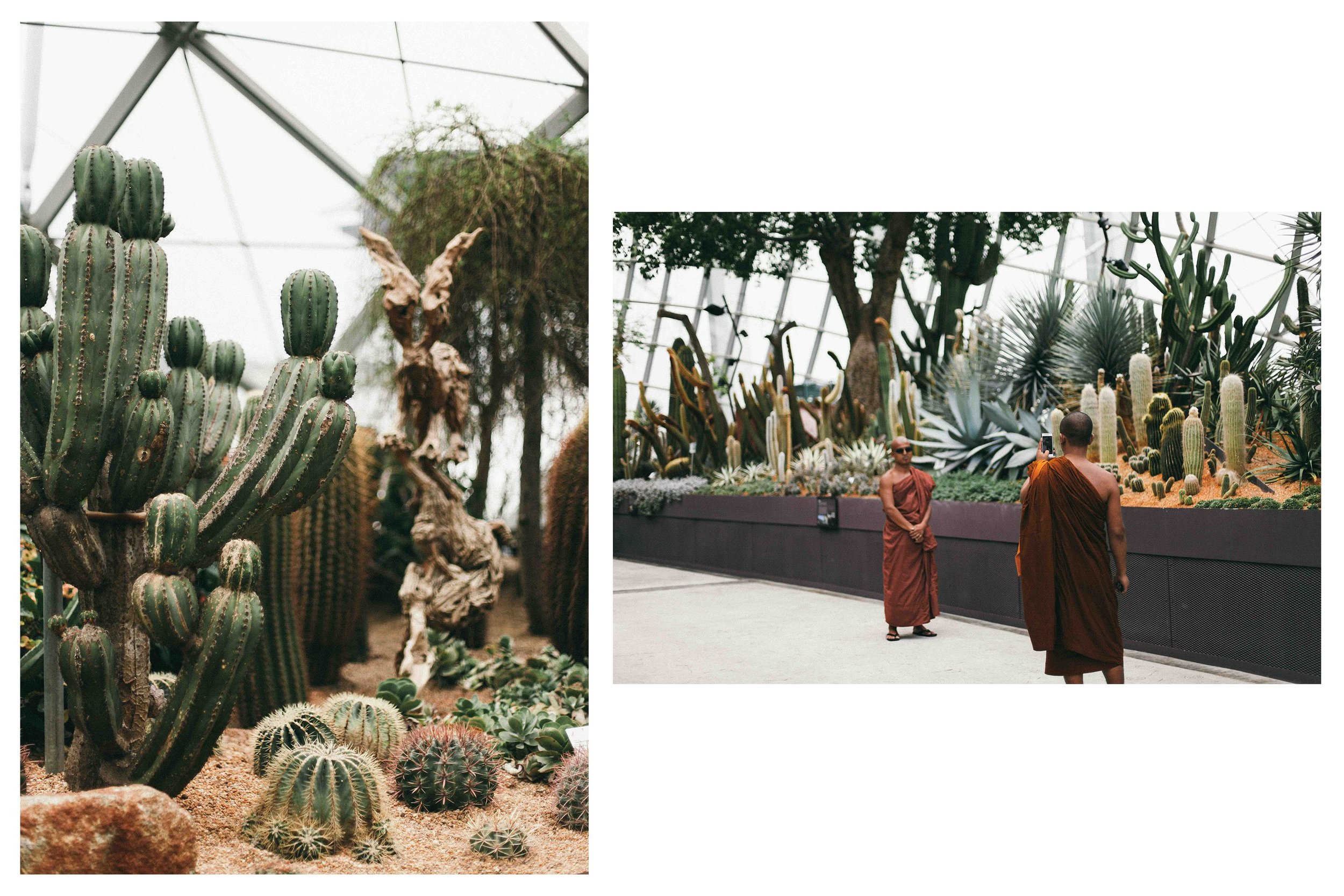 Cactus fields that everyone needs a photo with