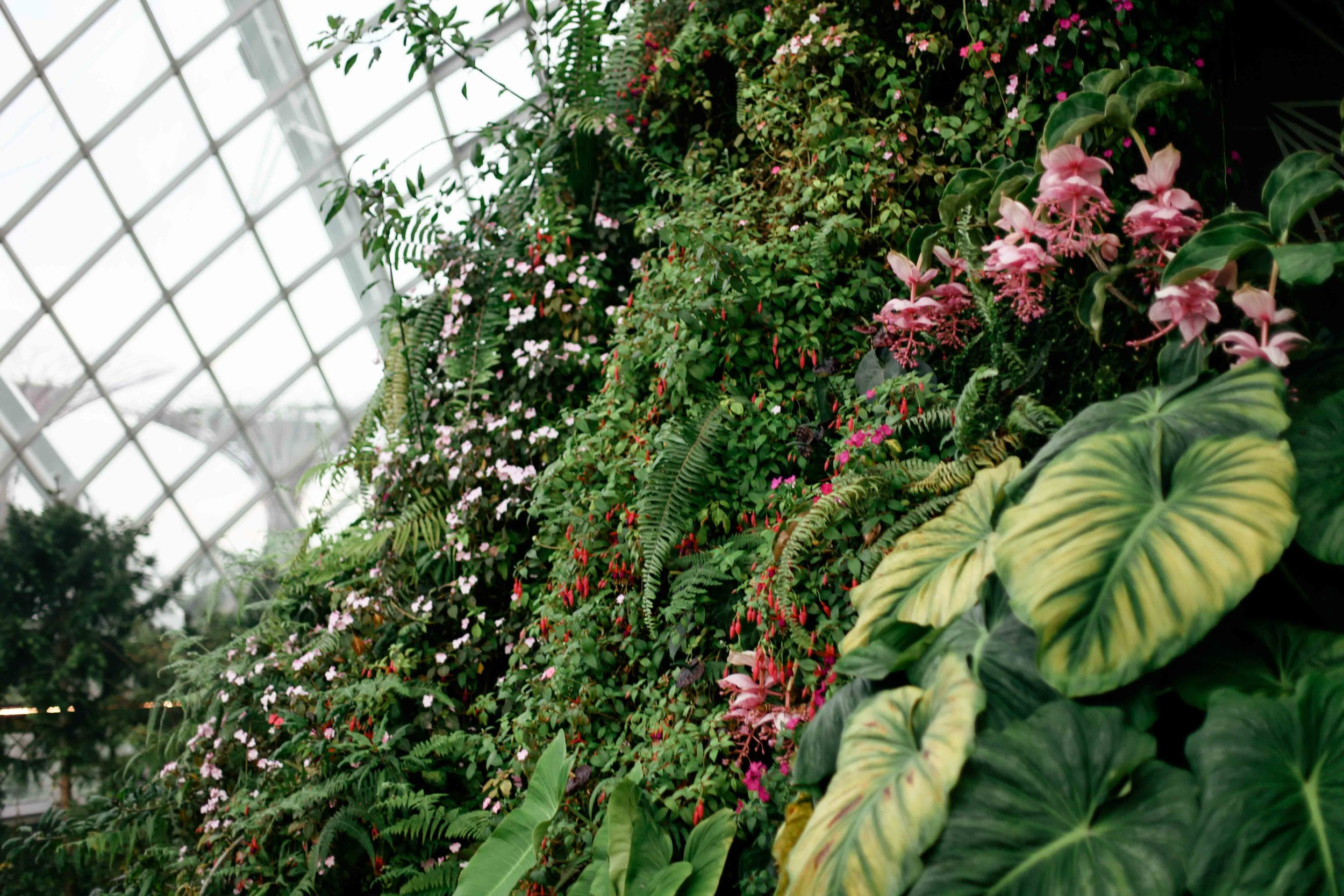 The wall of flowers like flows like a river