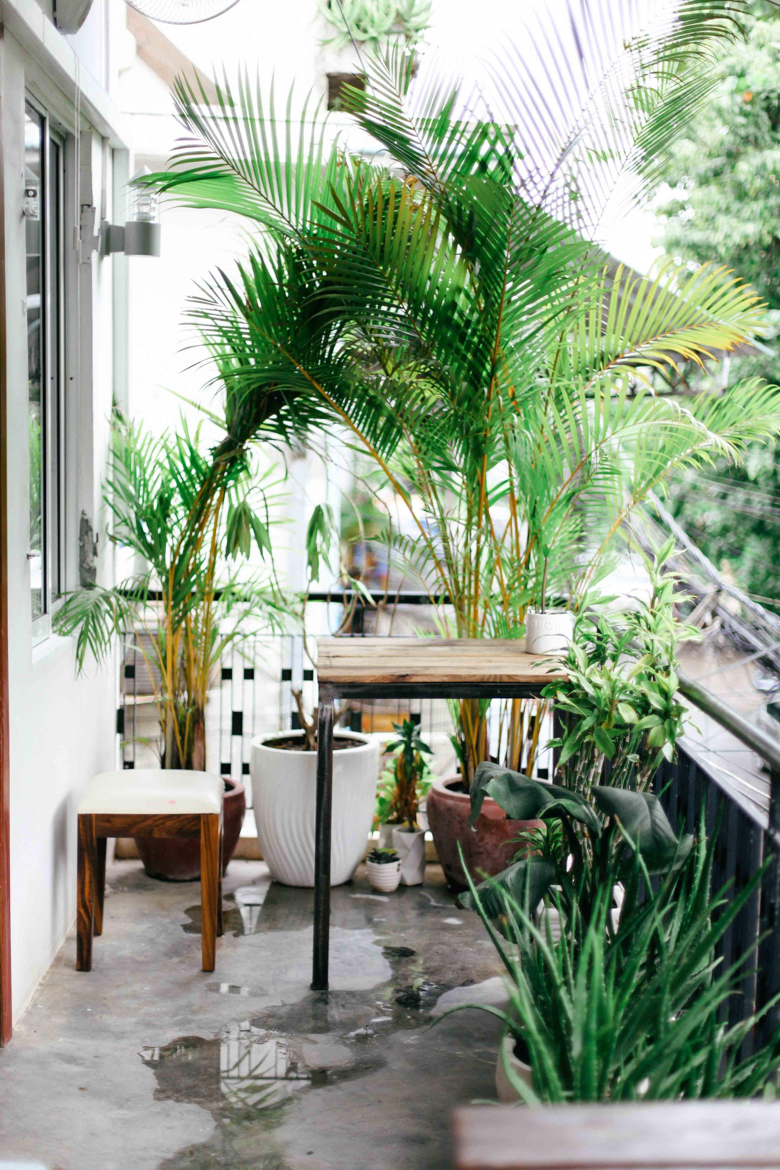 backyard cafe phnom penh le sycomore